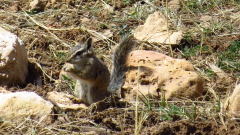 need some mammal id help please- mostly california