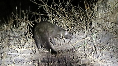 Help request on Mongoose identification