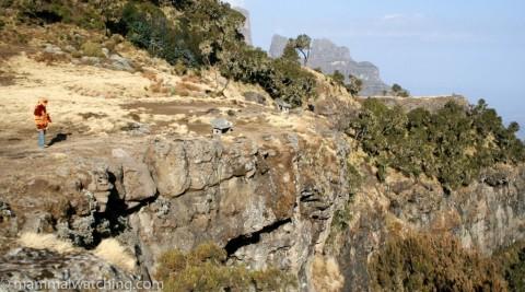 Ethiopia, 2008 Trip Report