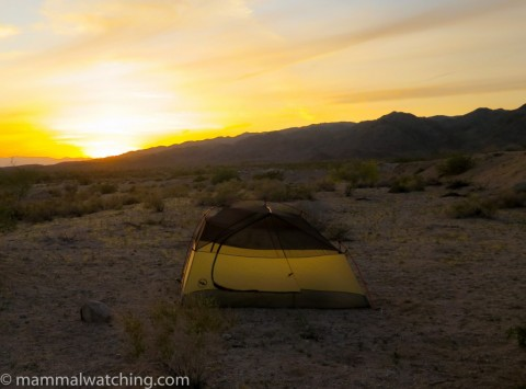Californian Weekend: Joshua Tree and Environs
