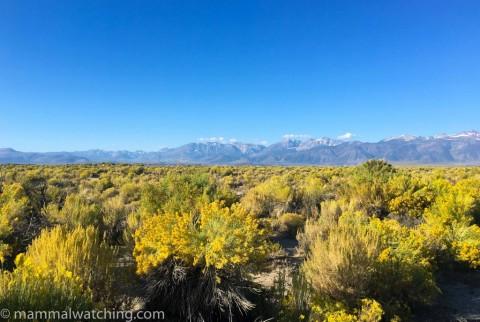 48 Hours in the Eastern Sierras