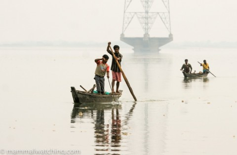 Assam, 2008