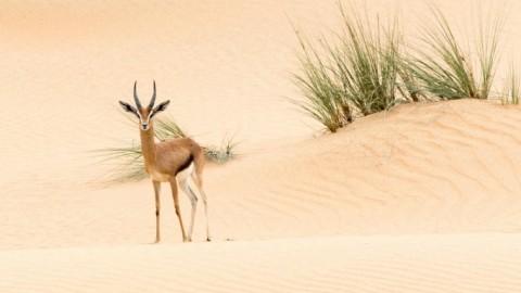 United Arab Emirates Trip Report