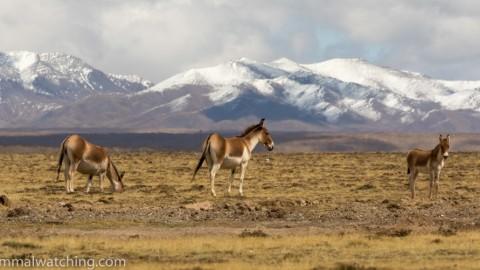 Tibetan Plateau, 2015