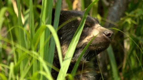 Andean Rare Mammals Tour – Join for November 2019