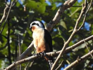Trip Report by Asian Adventures Birding Guide Deepak Kumar – Corbett National Park and Chambal River