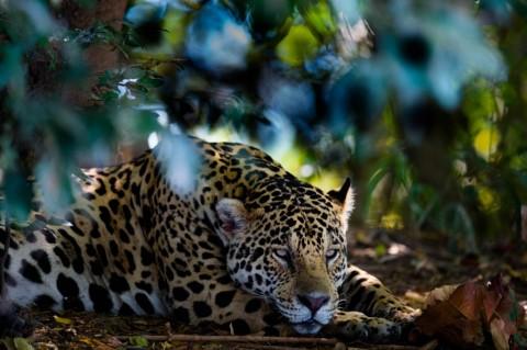 Pantanal in July (Brazil)