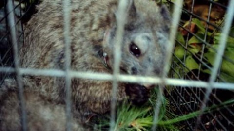 Podcast Episode 6: meet the man who rediscovered the Woolly Flying Squirrel