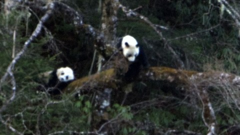 Sichuan Mammal Watching Tour – March 2019 – Royle Safaris Trip Report