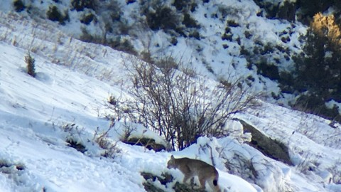First post: a few mammals from Kyrgyzstan