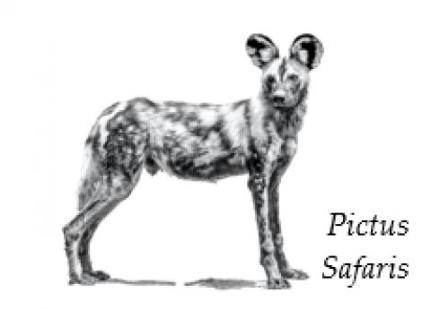 Pictus Safaris