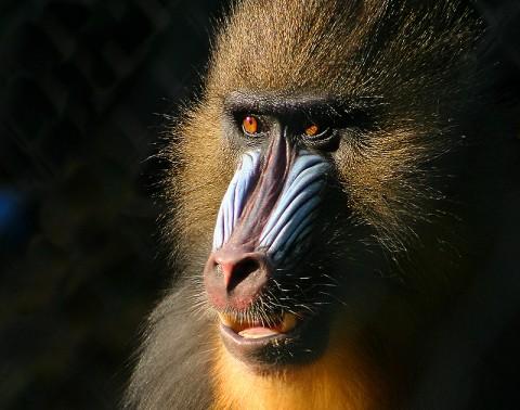 Gabon Mammal Tour 2019 – One Space Left