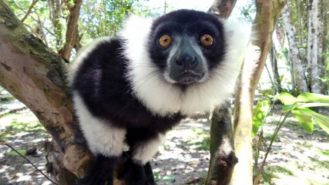 Madagascar Wildlife (Mammal Watching) Tour Trip Report from Royle Safaris