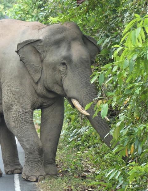 Thailand: Khao Yai