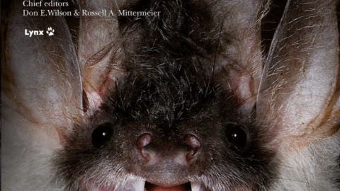 Book Review: Handbook of the Mammals of the World Vol 9: The Bats