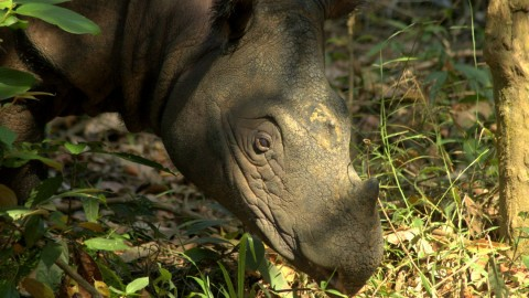 Sumatran Rhino Expedition Trip Report – Royle Safaris