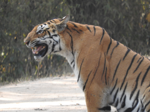 India, Kanha Tiger Reserve