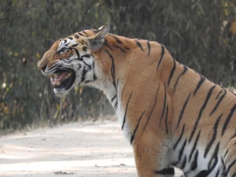 India, Kanha Tiger Reserve