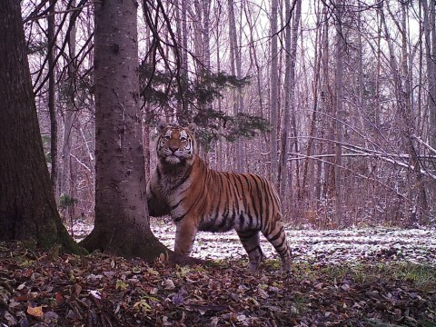 Out Now: Episode 10 of the Mammalwatching Podcast – Martin Royle