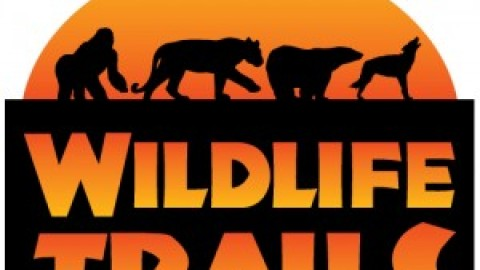 Advert: The Glory of Wild Sabah, Departing October 2021