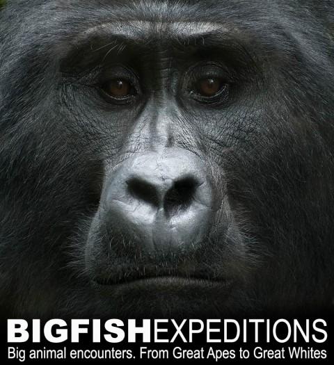 Big Fish Expeditions