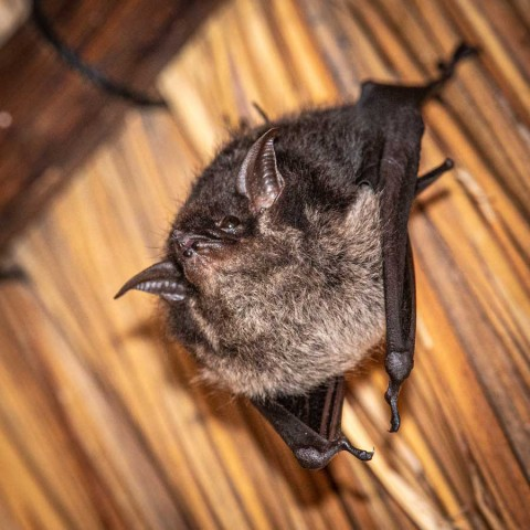Bat Weekend in Yucatan