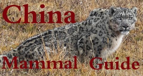 Kevin Zhong – China Mammal Guide
