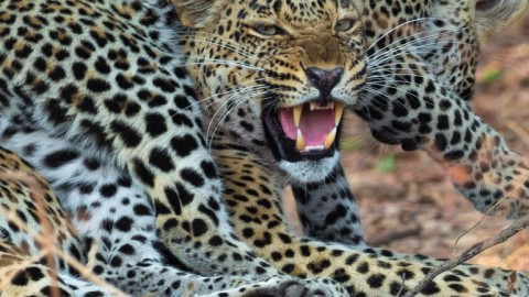 Advertising Two trips to Zambia's South Luangwa NP with Emerald Safaris. Feb & Mar 2020