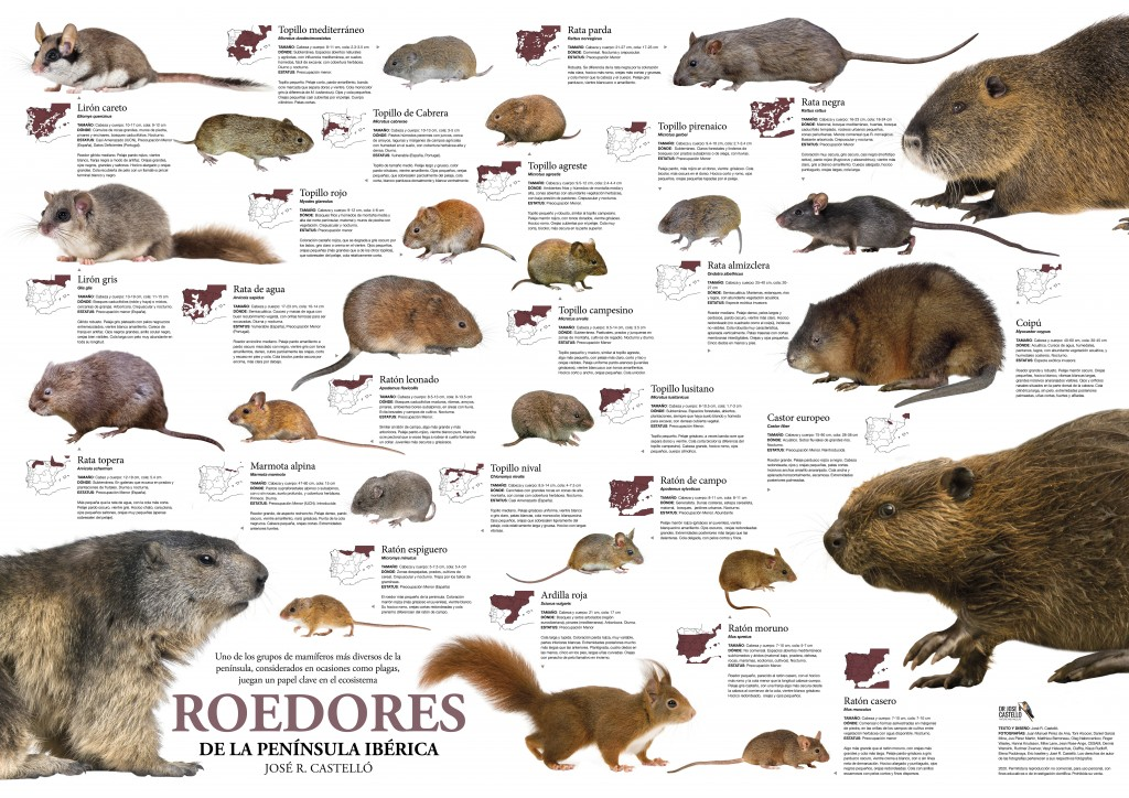 Two Mammal Posters for Spain from José R. Castelló